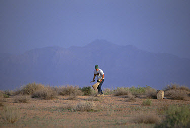 Researcher Jim Patton lays down traps to collect rodents in desert, Iran  -  Mark Moffett
