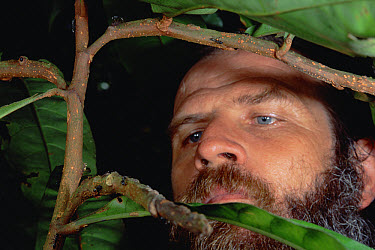 Passion Flower (Barteria sp) scientist Doyle Mckey cautiously approaches vine occupied by Ant (Tetraponera sp) colony, Cameroon  -  Mark Moffett