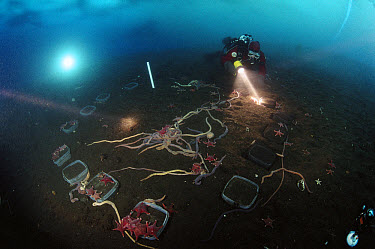 Research divers conduct long-term experiment underwater, Antarctica  -  Norbert Wu
