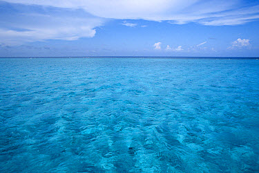 White sand and shallow water in inner lagoon, Grand Cayman, Caribbean  -  Norbert Wu
