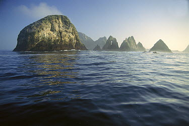 Farallon Islands, 20 miles from San Francisco, supports a large population of Great White Sharks, Farallon Islands, California  -  Norbert Wu