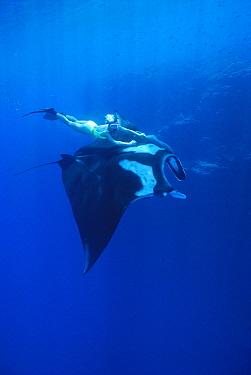 Manta Ray (Manta birostris) being ridden by humans at seamount, Revillagigedo, Baja California, Mexico, Pacific Ocean  -  Norbert Wu