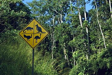 Kangaroo, Tiger Quoll, and Emu road sign in rainforest habitat, Queensland, Australia  -  Norbert Wu