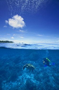 Green Sea Turtle (Chelonia mydas) and scuba diver underwater, Sipadan Island, Borneo  -  Norbert Wu