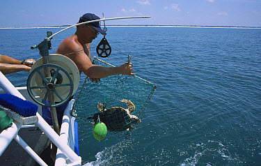 Researchers test efficiency of Turtle Exclusion Device, Florida  -  Norbert Wu