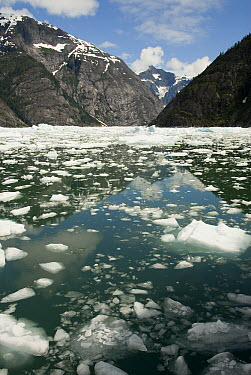 LeConte Glacier receding, showing evidence of global warming, LeConte Bay, Alaska  -  Norbert Wu