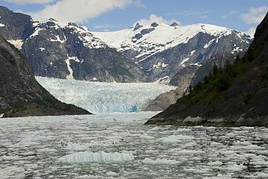 LeConte Glacier is receding showing evidence of global warming, LeConte Bay, Alaska  -  Norbert Wu