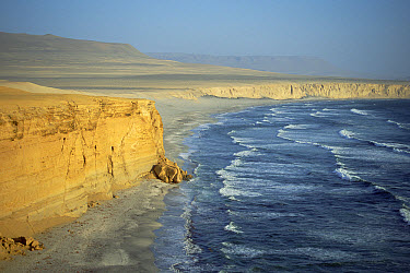 Atacama Desert, weather beaten sea cliffs and Pacific Ocean, Paracas Peninsula, Peru  -  Tui De Roy