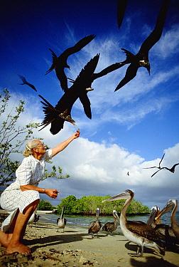 After 40 years on the island, Jacqueline De Roy still enjoys feeding fish scraps to Frigates and Pelicans, Academy Bay, Santa Cruz Island, Galapagos Islands, Ecuador  -  Tui De Roy