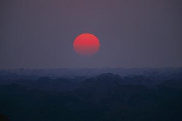 Tropical rainforest sunset over steamy canopy, Tambopata-Candamo Reserved Zone, Amazon Basin, Peru  -  Tui De Roy