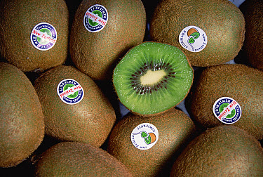 Kiwifruit (Actinidia deliciosa) grown in New Zealand was renamed the Kiwi Fruit for export and became an international success, New Zealand  -  Tui De Roy