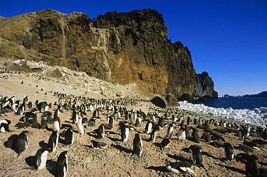 Adelie Penguin (Pygoscelis adeliae) rookery, Volcanic Foyn Island, Possession Islands, Ross Sea, Antarctica  -  Tui De Roy
