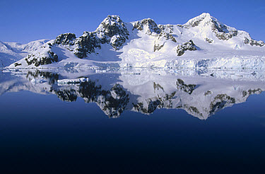 Ice clad mountains dropping directly into the sea, Paradise Bay, Antarctica Peninsula, Antarctica  -  Tui De Roy