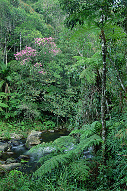 Atlantic Forest ecosystem, Bocaina National Park, Brazil  -  Tui De Roy