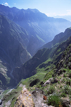Colca Canyon dropping 3,400 meters from mountaintop to Colca River (deeper than the Grand Canyon), Peru  -  Tui De Roy