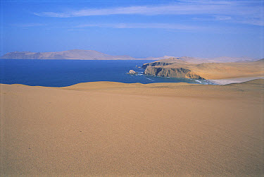 The rainless coast of the Atacama Desert is bordered by rich Humboldt Current upwelling, Paracas National Reserve, Peru  -  Tui De Roy
