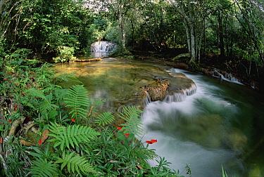 Mato Grosso, limestone springs and waterfalls, Betione, Serra de Bodoquena, Brazil  -  Tui De Roy