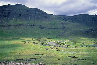 Llama and Alpaca rangeland, Pampa Galeras National Reserve, Peruvian Andes, Peru  -  Tui De Roy