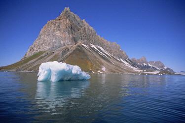 On Spitsbergen Island, abundant vegetative growth is caused by run-off from seabird nesting colonies on the nearby cliffs, Hornsund, Svalbard Archipelago, Norwegian Arctic  -  Tui De Roy