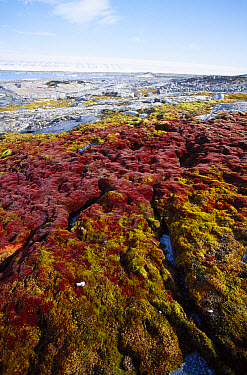 Tundra bog, sparse moss beds in glaciated terrain, Kvitoya, eastern Svalbard, Norwegian Arctic  -  Tui De Roy