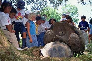 Galapagos Giant Tortoise (Chelonoidis nigra) field trip to show children wild tortoises, Charles Darwin Research Station, Galapagos Islands, Ecuador  -  Tui De Roy