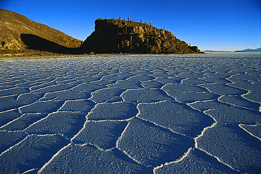 Hexagonal crystallization fissures in 100 kilometer wide, 500 kilometers thick and 12,000 year old Salar de Uyuni salt pan, altiplano, Potosi District, Bolivia  -  Tui De Roy