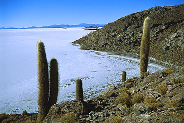 Island in the middle of 100 kilometer wide Salar de Uyuni salt pan showing hexagonal crystallization fissures, Bolivian altiplano, Potosi District, Bolivia  -  Tui De Roy