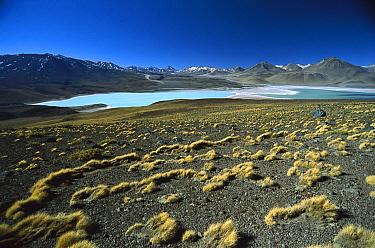 Eduardo Avaroa Faunistic Reserve, altiplano, Bolivia  -  Tui De Roy