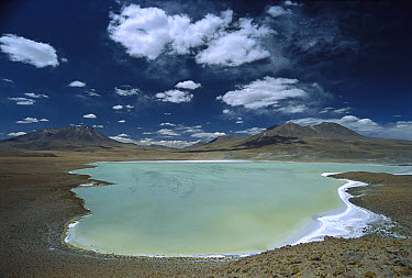 Laguna Canapa, Potosi District, altiplano, Bolivia  -  Tui De Roy