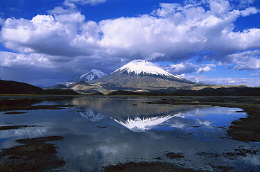 Parincota, elevation 6,232 meters, Lauca National Park, Andes Mountains, Chile  -  Tui De Roy