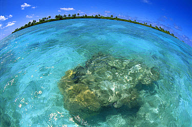 Palmyra Atoll, a wet, equatorial atoll with fringing reefs, native forests and abundant seabirds, Palmyra Atoll National Wildlife Refuge, US Line Islands  -  Tui De Roy