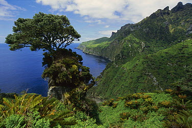 The Glenn, site of the early meterological station on the east coast of Gough Island, South Atlantic  -  Tui De Roy