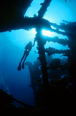 Diver exploring the Liberty shipwreck, Bali's most popular dive site, Tulamben, Bali, Indonesia  -  Fred Bavendam