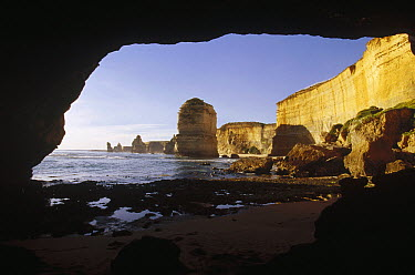 View from access tunnel of Twelve Apostles and of cliffs that protect Little Blue Penguin colonies from predators, Port Campbell, Victoria, Australia  -  Fred Bavendam