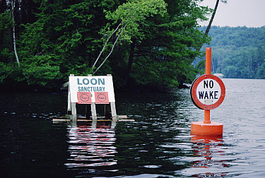Floating signs set by the Loon Preservation Committee establish boundaries around nesting loons, New Hampshire  -  Michael Quinton