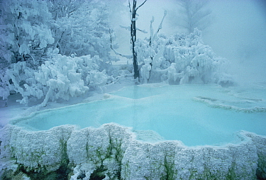 Steaming pool in winter, Mammoth Hot Springs, Yellowstone National Park, Wyoming