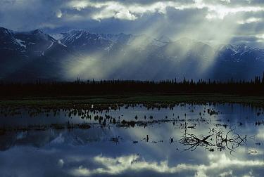Sunlight filtering through clouds over boreal pond, Alaska  -  Michael Quinton