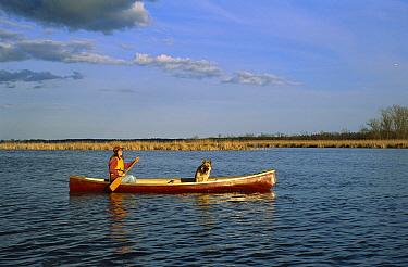 German Shepherd (Canis familiaris) enjoying a ride in a canoe  -  Mark Raycroft