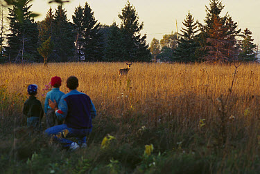 White-tailed Deer (Odocoileus virginianus) doe in field watched by father and two sons  -  Mark Raycroft