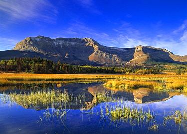 Sofa Mountain reflected in lake, Waterton Lakes National Park, Alberta, Canada  -  Tim Fitzharris