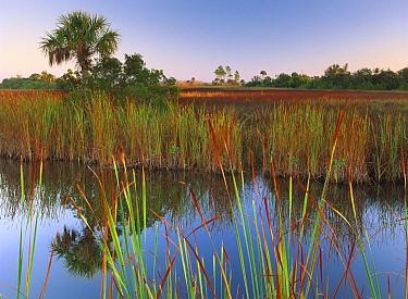 Everglades and palm trees, Fakahatchee State Preserve, Florida  -  Tim Fitzharris