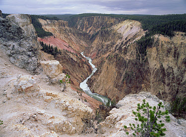 Yellowstone River and Grand Canyon of Yellowstone National Park, Wyoming  -  Tim Fitzharris