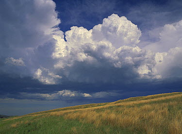 Grassland and cumulus clouds, Wind Cave National Park, South Dakota  -  Tim Fitzharris