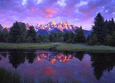 Teton Range at sunrise, Schwabacher Landing, Grand Teton National Park, Wyoming  -  Tim Fitzharris