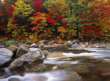 Wild river in eastern hardwood forest, White Mountains National Forest, Maine  -  Tim Fitzharris