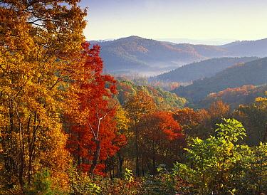 Autumn foliage on Blue Ridge Range near Jumping Off Rock, North Carolina  -  Tim Fitzharris