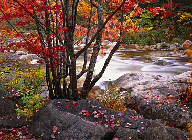 Swift River near rocky gorge, White Mountains National Forest, New Hampshire  -  Tim Fitzharris