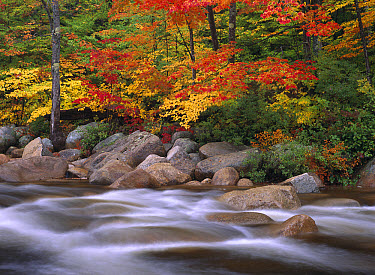 Autumn along Swift River, White Mountains National Forest, New Hampshire  -  Tim Fitzharris