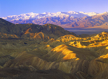 Looking at Panamint Range over the Furnace Creek playa from Zabriskie Point, Death Valley National Park, California  -  Tim Fitzharris