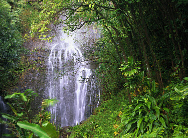 Waterfall along Hana coast, Maui, Hawaii  -  Tim Fitzharris